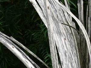Wer Entfernt Wespennester : wie entfernt man ein wespennest wespennest unter dem dach umsiedlung und entfernung wespennest ~ Frokenaadalensverden.com Haus und Dekorationen