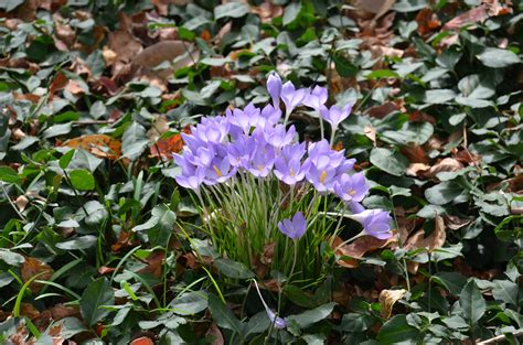 crocus a start to what grows there hugh