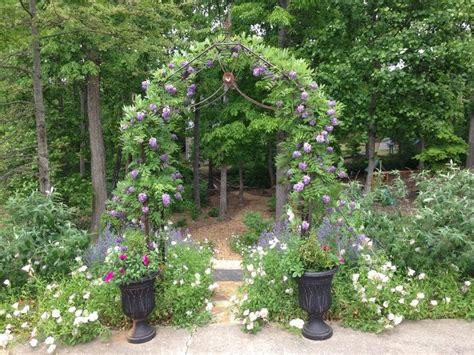 entrance   garden amethyst falls wisteria  arbor