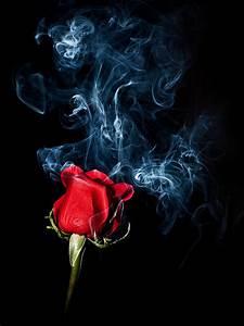 Smoky Rose > Blog Post > Blog > April Koehler Photography