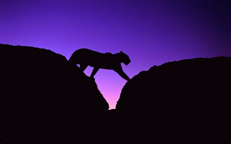 Animal Silhouette Wallpaper - animals silhouettes leopards wallpaper