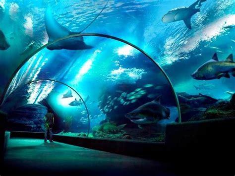sea life bangkok ocean world attractions  siam bangkok