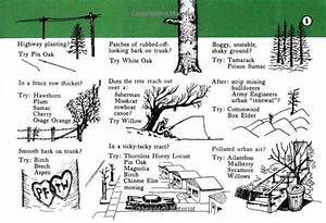 469 Best Arboretum Ideas For Community Images On Pinterest