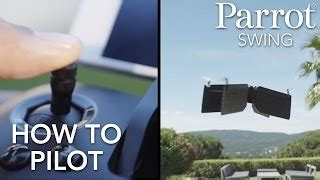 parrot swing parrot store official