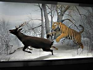 Image Tiger Diorama Examples Download