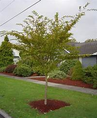 small trees for landscaping 1 Landscaping: Landscaping Small Trees Pictures