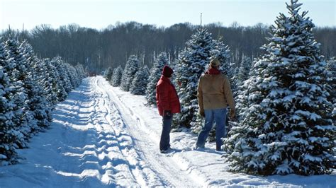 cut your own christmas tree westminster md where to cut your own tree in the washington d c area nearest