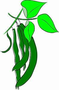 Green bean bud clipart - Clipground