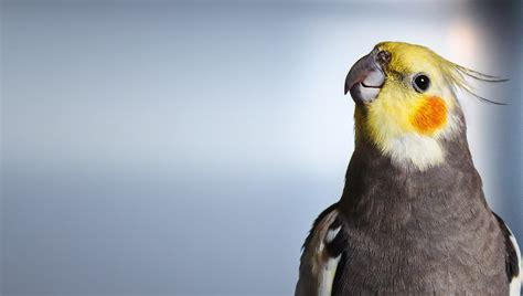 Small Birds Insurance - ExoticDirect