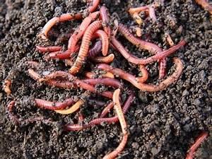 Vers De Terre Acheter : lombricomposteur compostage par des vers de terre youtube ~ Nature-et-papiers.com Idées de Décoration
