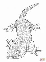 Gecko Coloring Pages Tokay Printable Drawing Dot sketch template