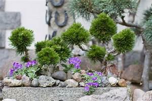 Bilder Von Steingärten : steingarten gestalten tipps f r das eigene steinbeet garten ~ Indierocktalk.com Haus und Dekorationen
