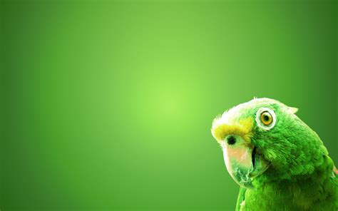 Green Animal Wallpaper - wallpaper of animals a green parrot on the green screen