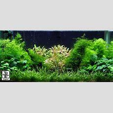 Aquascaping Layout & The Golden Ratio  The Aquarium Plant