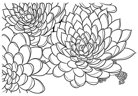 Printable Succulent Coloring Cards