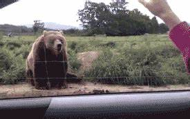Bear Hello GIF - Find & Share on GIPHY