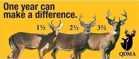what a difference a year makes badgers bucks nba draft success 12 7 16 to cull or not to cull