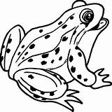 Frog Coloring Outline Clipart Tree Frogs Printable Amphibians Animals Disegno Sheet Designs Frosch Rana Reptiles Colouring Clipartmag Colorare Rane Internet sketch template