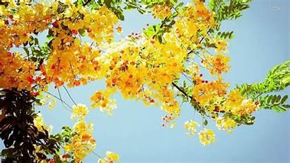 Yellow Flower Aesthetic Desktop Wallpapers Flowers Background