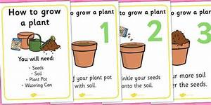 How To Grow A Plant Display Posters