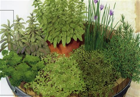 planter des herbes aromatiques en pot 7 activit 233 s pour le jardinier en ce mois d avril 2016 jardiner avec jean paul