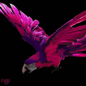 Pink And Purple Macaw Photograph by Megan Dotter