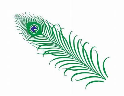 Feather Peacock Clip Clipart Feathers Tail Cliparts