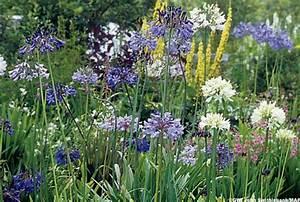 Bulbes D été : des bulbes pour toutes utilisations au jardin en massifs ~ Melissatoandfro.com Idées de Décoration
