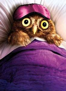 Best Collection Of Funny Owl Photos I Can Has