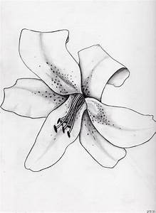 8 Lily Drawing Stargazer Lily For Free Download On Ayoqq Org