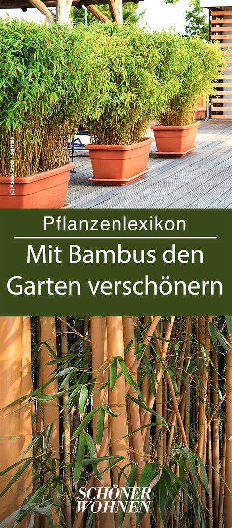 Bambus Garten Pflanzen Kölle by Bambus Pflanzen Schneiden Mehr Pflanzen Bambus
