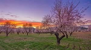 Los mejores paisajes de almendros en flor de España Noticias de El tiempo