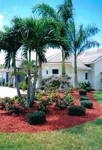 Best 25+ Palm plants ideas on Pinterest Palm house