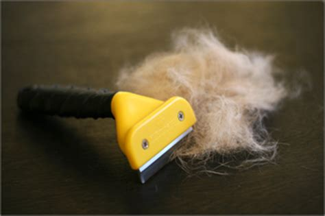 Do Puggles Shed A Lot Of Hair by The Puggle 187 Archive 187 Furminator