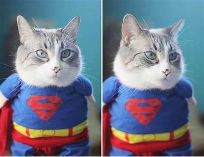 Cats Costumes Funniest Cat Superman John Kent