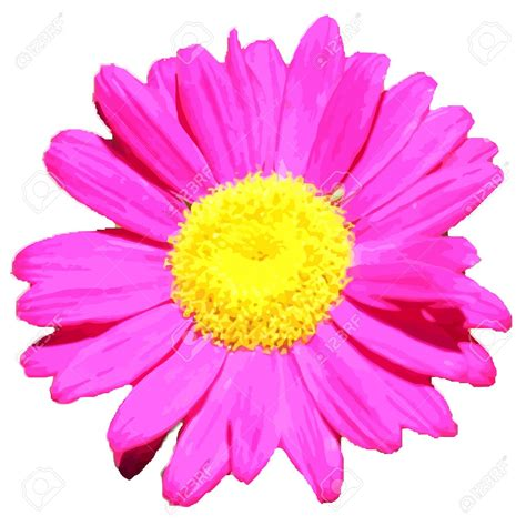 Flower No Background Transparent Pink Flower Clipart Png Image U200b Gallery