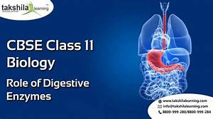 Ncert  U0026 Cbse Biology Class 11 Digestive Enzymes Notes  U0026 Videos