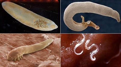 Bağırsak Paraziti Tenya Nedir ve Neden Oluşur?