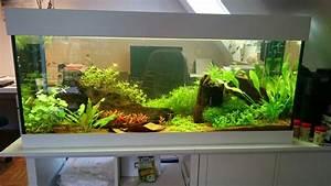 Aquarium Als Raumteiler : 240 l raumteiler s wasser wg aquarium forum ~ Michelbontemps.com Haus und Dekorationen