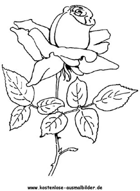 ausmalbilder malvorlagen rosen