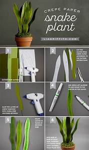 Potted Crepe Paper Snake Plant - Lia Griffith