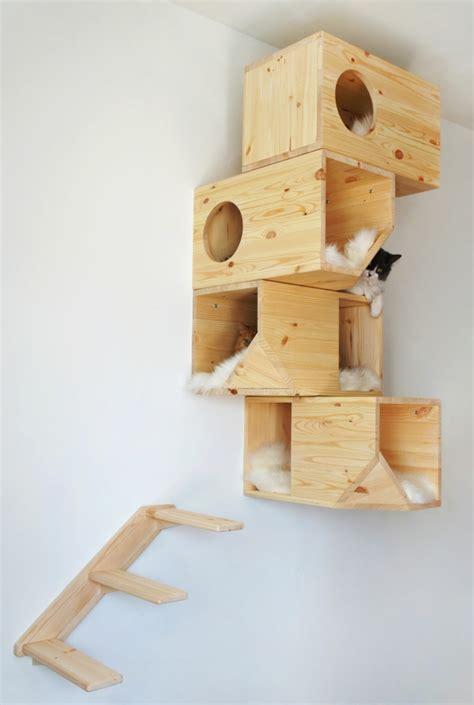 la maison des chats pour le chat domestique a aussi besoin de logement