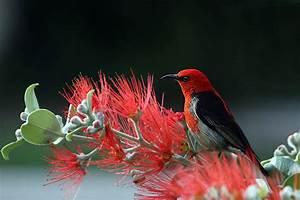 Nature Wallpaper of Nature, Bird, Red, Animal ...