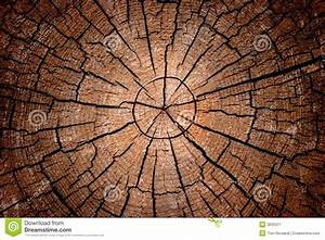 Crosscut Log Radial Pattern Royalty Free Stock Photography ...