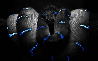 Snake Wallpapers Cool Snakes Desktop Awesome