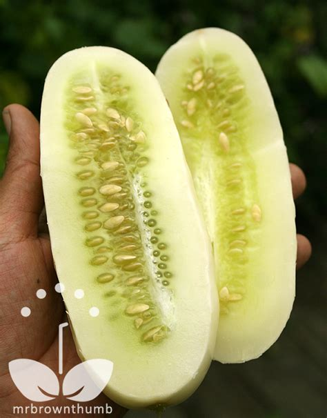 Cucumber 'White Wonder' From Burpee Seeds : MrBrownThumb