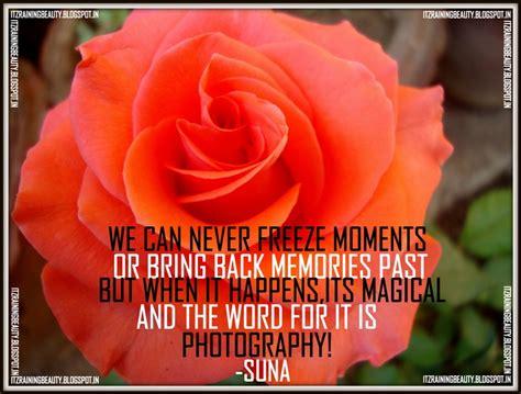 beautiful roses quotes quotesgram
