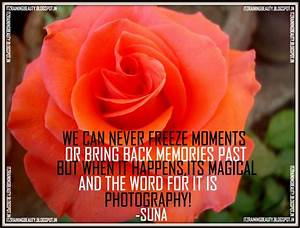 Images Of Beauty Of Rose Quotes Summer