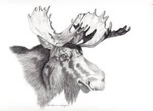 Bull Moose Head Drawing
