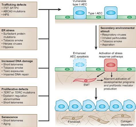 genetic studies provide clues   pathogenesis